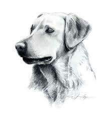 Labrador retriever dog pencil drawing art print by artist dj rogers. Dog Pencil Drawing, Realistic Pencil Drawings, Drawing Eyes, Animal Drawings, Pencil Drawing Tutorials, Art Drawings, Drawing Art, Pencil Art, Labrador Retrievers