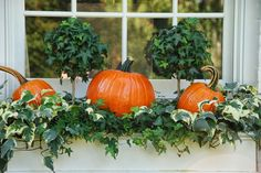 window boxes with pumpkins                                                                                                                                                      More