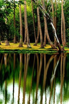 Reflection, Reunion Island photo via ramon Beautiful World, Beautiful Images, Voyage Reunion, Tree Forest, Terra, The Great Outdoors, Wonders Of The World, Cool Photos, Amazing Photos