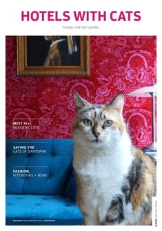 Ashleigh Mills launches her travel directory – 'Hotels with Cats' Stages Of Writing, Blogging For Beginners, Inspire Me, Writers, Cat Lovers, Centre, Students, Hotels, Product Launch