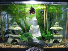 My buddha zen aquarium fish aquariums pinterest for Decoration zen aquarium