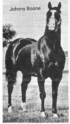 Johnny Boone, br,h, 65, 8-3-1 (1)-0 $4,177 SI-100 Rebel Cause X Me Bright X Leo, 2nd New Mexico Breeders Derby, Sire of earners of more than $1.9 million including, Mr Boone Bug SI-101 $46,966, Baby Boone SI-96 $9,553, Kitty Boone SI-99 qualified for Champion of Champions.