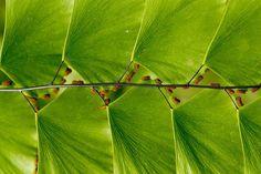 plantas geometricas-20. Folhas simétricas