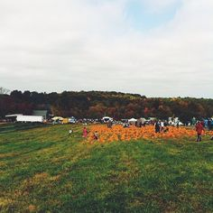 A weekend day trip to the pumpkin patch is the perfect fall family activity!