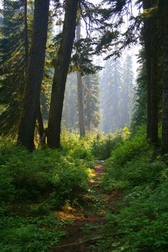 Forests of Seattle, I miss all the GREEN now its all..... Sand theres not even dirt here!!