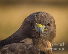 What Are You Looking At? by Mitch Shindelbower