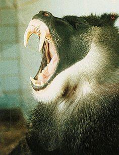 big big BIG teeth.  no thank you.