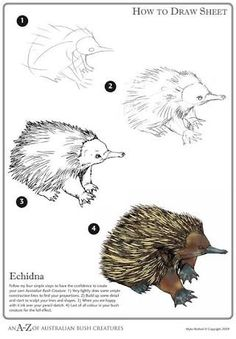 image result for easy pencil drawing of a echidna