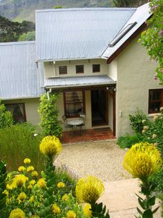 My indigenous garden in Cape Town full of proteas & pincushions.