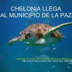 """CHELONIA LLEGA AL MUNICIPIO DE LA PAZ Chelonia: El retorno de la Tortuga Marina de Wallace J. Nichols BIBLIOTECA PÚBLICA MUNICIPAL """"MAESTROS JUBILADOS"""" 12 J. http://slidehot.com/resources/chelonia-llega1.33964/"""