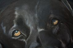 'Arnie': Detail from a work in progress. Black Labrador by Tania Robinson, private commission. Acrylic on canvas.