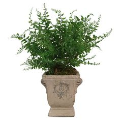 Add a touch of nature-inspired elegance to your home with this lovely faux fern arrangement in a stoneware planter.   Product: Fa...