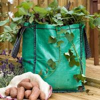 Pacy Crochets: Growing Sweet Potatoes in a Bag