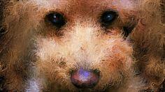 #イラスト #トイプードル #イヌ大好き このところ愛犬ティアモの絵を描いた中の一枚です。  このマイケル・ジャクソンの歌はおススメです、子供のころから比較的新しいバラード曲のミックスです。 michael jackson I'll Be There http://youtu.be/5VcGHPZi8hs