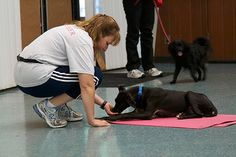 Enrichment and Training for Shelter Dogs in a Shelter Dog Training Class