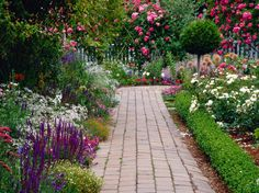 A glorious herb garden to attract birds and bees. What about butterflies?