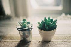 little plants #plants #film
