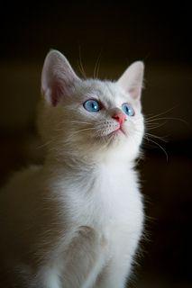 Portrait of a cat | by JTeale