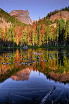 ~~What Lies Below - Nymph Lake - Rocky Mountain National Park - Colorado ~ lily pads and mountain reflections by wboland~~