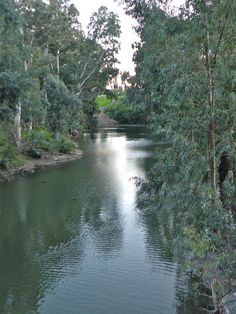 The Jordan River in Israel  Close to the traditional baptismal site of Jesus.
