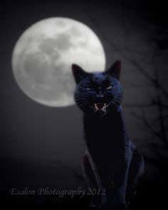 Black cat and full moon supermoon an 8 x 10 by EsalonPhotography, $35.00