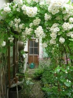 Arch of white flowers. Old Charming Garden.