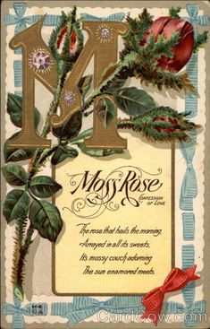 Moss Rose Confession of Love Series M-6 The rose that hails the morning, Arrayed in all its sweets, It's mossy couch adorning The sun enamored meets