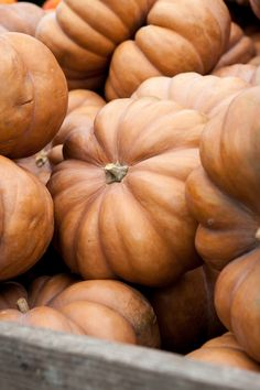 Long Island Cheese Pumpkins~oh we grew so many of these...love them....