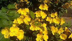 Nice Yellow, Nice, Garden, Plants, Garten, Flora, Plant, Lawn And Garden, Outdoor