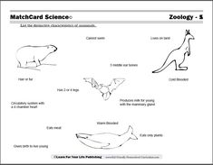 1000 images about lapbooks on pinterest mammals worksheets and reptiles. Black Bedroom Furniture Sets. Home Design Ideas
