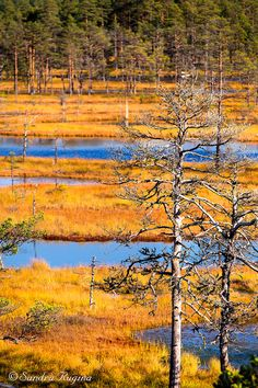 Photo print of a bog in Estonia Lahemaa by behindmyblueeyes