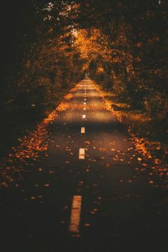 "setyourpridetotheside: "" Autumn Road auf We Heart It - http://weheartit.com/entry/204693367 """