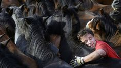 "Reveller tries to hold wild horse during ""Rapa Das Bestas"" traditional event in Sabucedo"