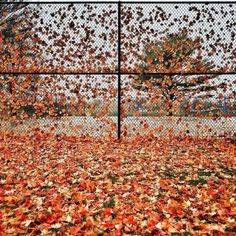 Fall leaves cover the ground and the tennis court fences in the town of Ottumwa Iowa. It's nice to be back in my home state in the fall. #itc15 by dguttenfelder