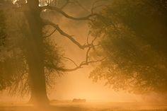 Photograph Pohansko by Robert Adamec on Photograph, Fancy, Celestial, Sunset, Nature, Outdoor, Photography, Outdoors, Naturaleza