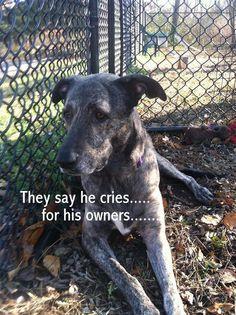 Greyhound Rescue Long Island Ny