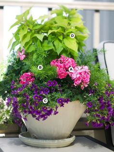 Use Fresh Spring Colors - Soft pink offers a cool, refreshing feel and is perfect for a lush geranium head. Its a perfect partner for purple and chartreuse. (A) Geranium (Pelargonium Moonlight Pink) - 2 (B) Asparagus fern (Asparagus densiflorus Sprengeri) Container Flowers, Container Plants, Container Gardening, Gardening Tips, Vegetable Gardening, Organic Gardening, Succulent Containers, Balcony Gardening, Gardening Courses