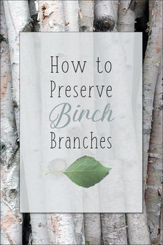 How to Preserve Birch Tree branches - White birch branches are exceptionally versatile and can be added to almost any decor. You can buy birch branches at the craft store or harvest your own, in which case you will want to take steps to preserve them. Birch Tree Decor, Tree Branch Decor, White Birch Trees, Branch Art, Decorating With Tree Branches, Tree Branch Crafts, Tree Bark Crafts, Birch Bark Crafts, Birch Logs