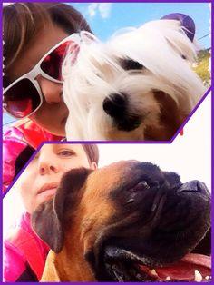 I ❤️ my dogs