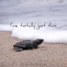 Positive Quotes : QUOTATION – Image : Quotes Of the day – Description Take a leap of faith into the next wave. For the app of beautiful wallpapers ~ www.everydayspiri… xo Sharing is Power – Don't forget to share this quote ! Baby Sea Turtles, Cute Turtles, Turtle Baby, Great Quotes, Me Quotes, Inspirational Quotes, Motivational, Strong Quotes, Meaningful Quotes