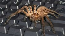 Preview spider, keyboard, big, insect, predator