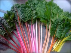 Hey, I found this really awesome Etsy listing at https://www.etsy.com/listing/70524282/organic-heirloom-rainbow-swiss-chard