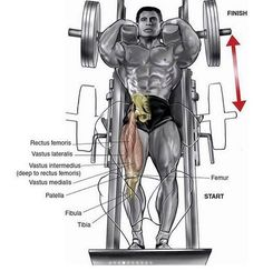 You want big QUADS but you just can& do squats? No worries, here are 3 exercises better than squats for your quads! Training Legs, Power Training, Weight Training, Strength Training, Fitness Motivation, Fitness Tips, Fitness Goals, Squat Machine, Mundo Fitness