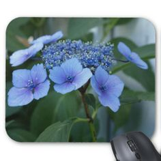 Lacecap Hydrangea Bloom Mousepad - $13.95 - Lacecap Hydrangea Bloom Mousepad - by RGebbiePhoto @ zazzle - Gorgeous blue and lavendar Lacecap Hydrangea blossoms in a garden. These blooms are also called Sheepsnose. Beautiful soft coloring makes this a perfect complement to any interior.