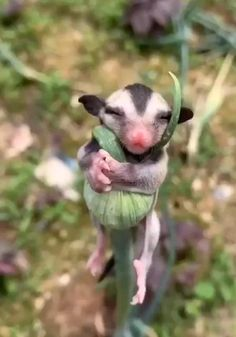 Cute Little Animals, Cute Funny Animals, Cute Dogs, Cute Babies, Wildlife Nature, Nature Animals, Animals And Pets, Wild Animals, Cute Animal Videos