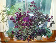 Five easy house plants