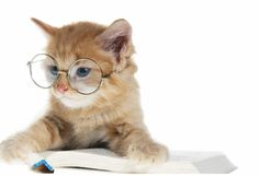 gatode-estudioso-gif