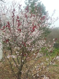 M Spring Blooms, Plants, Plant, Planting, Planets, Spring Colors