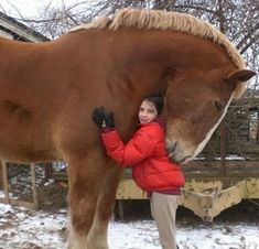 Animals And Pets, Baby Animals, Funny Animals, Cute Animals, Giant Animals, Wild Animals, Giant Dogs, Large Animals, All The Pretty Horses