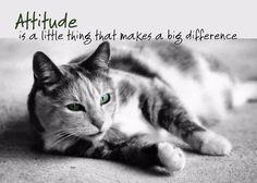 Attitude is a little thing that makes a big difference.  #Best #Cat #Litter